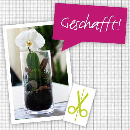 diy orchidee m hle dickmann alles f r garten und tiere. Black Bedroom Furniture Sets. Home Design Ideas